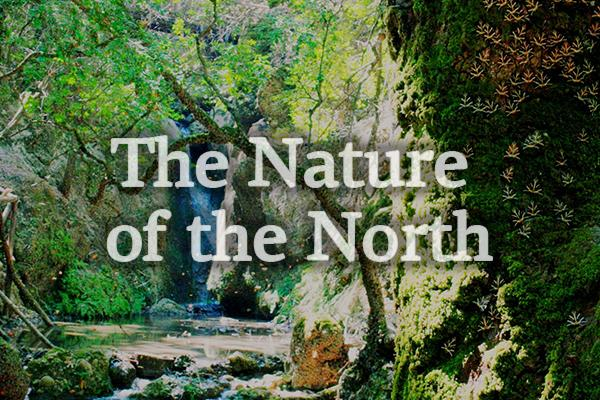 The Nature of the North